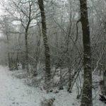Winter-Impressionen