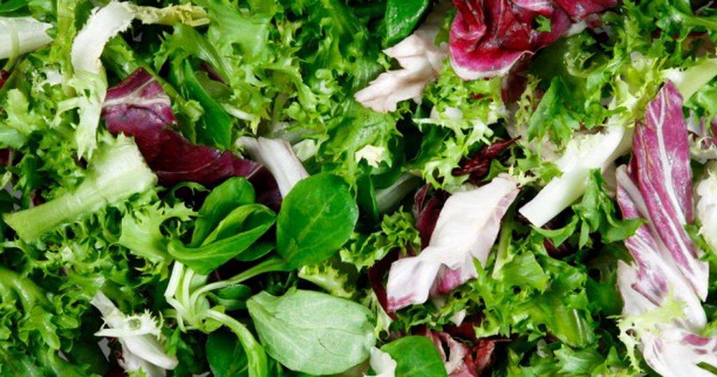 Salatsorten