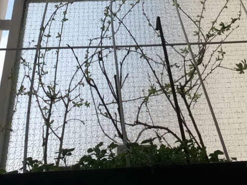 Goji-Beere Pflanze