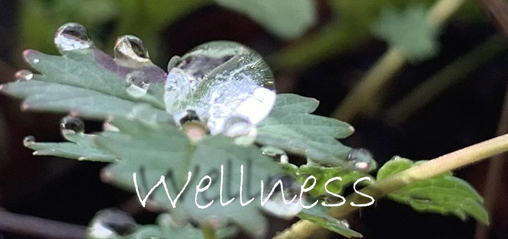 Wellnes