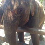 Bali Elefant