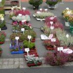 Mein Blumenstand_Markt Lehrte