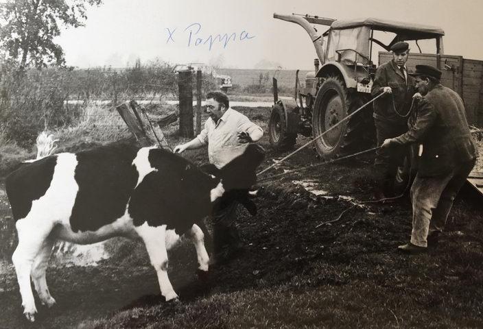 mein Onkel und Helfer beim einfangen eines Rinds