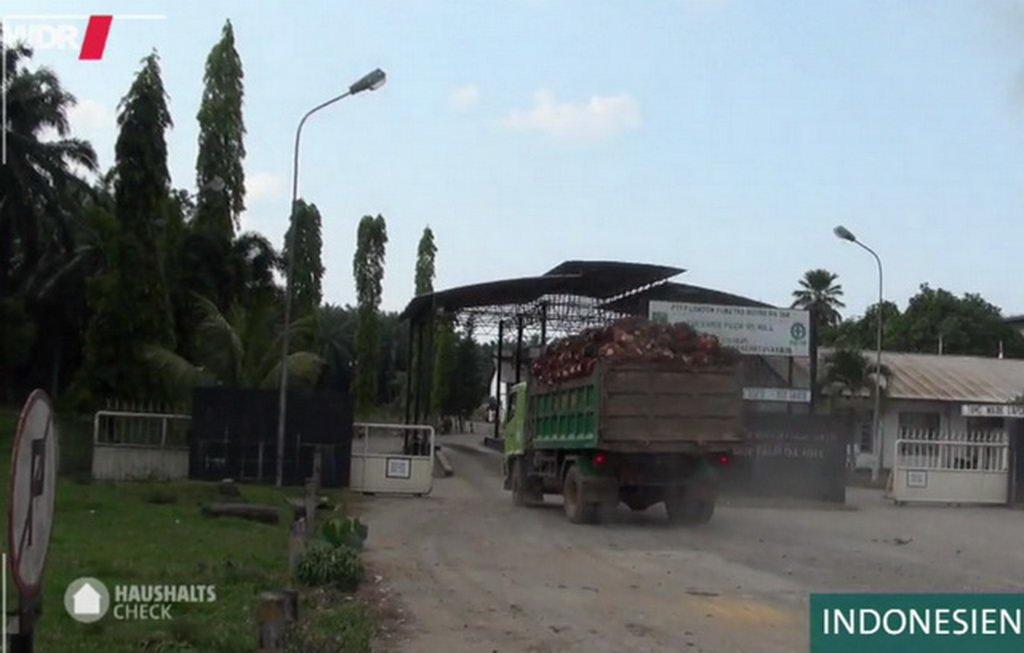 Palmöl-perfektes Fett oder Rohstoff mit vergheerenden Folgen