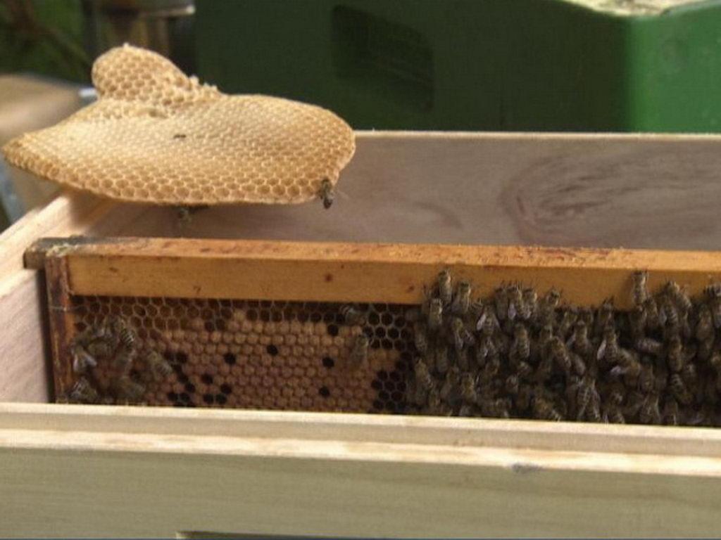 Bienen-Zukunft in der Stadt