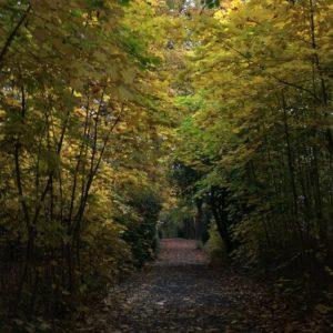 im Stadtpark Lehrte spazieren gegangen