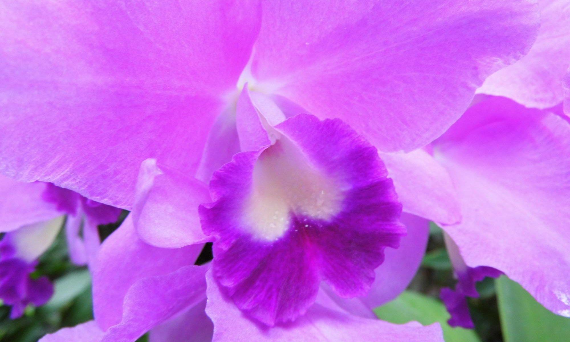 Ausflug Bergarten Orchideenhaus Hannover
