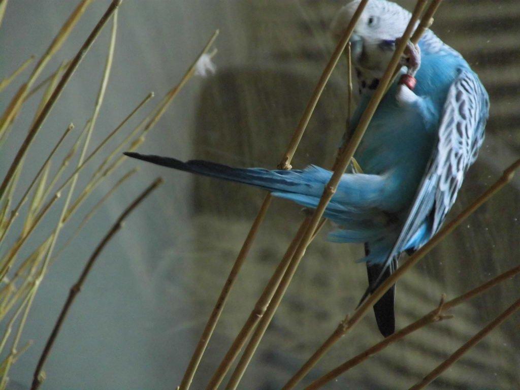 Pauline auf Bambus