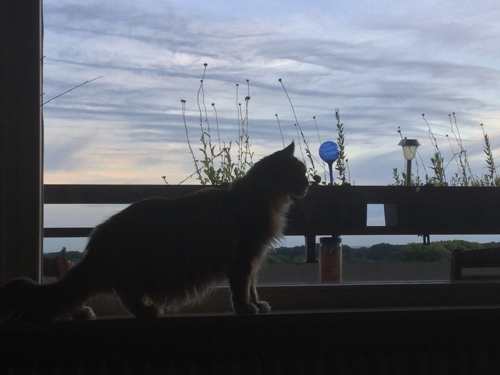 Luna Abends auf Wanderschaft
