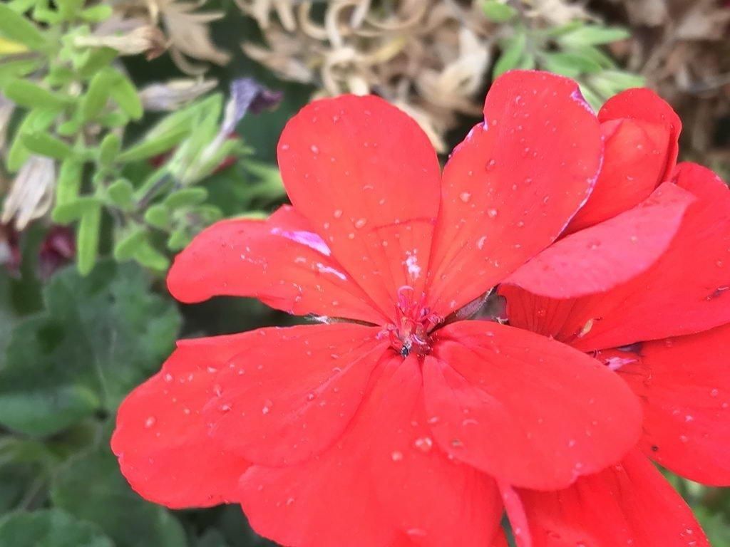 Kaffeepause im Regen mit Blume