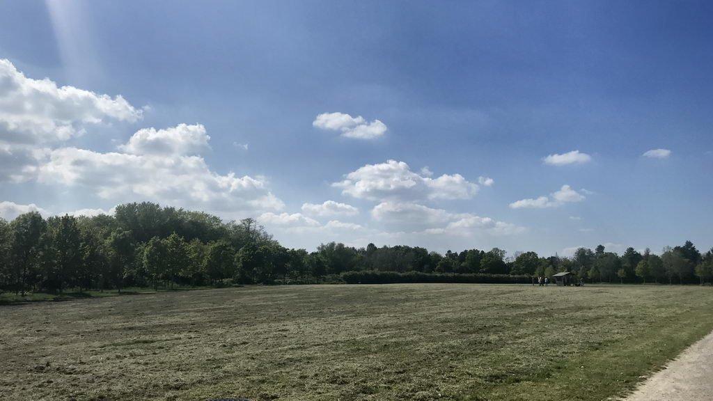 Besuch Streuobstwiese Lehrte - gemähte Rasenfläche