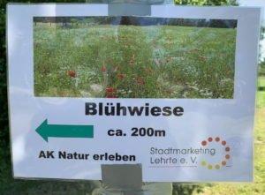 hier gehts zur Blühwiese