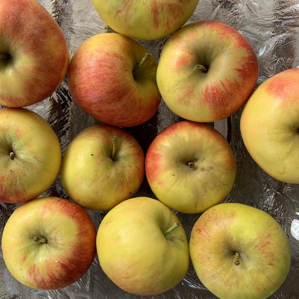 alte Apfelsorten vom Bauernmarkt: Topaz und Elstar