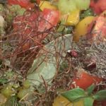 Tomaten-Sugo - Chili Thymian Lorbeerblatt
