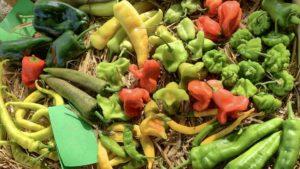Stadtmarketing Lehrte zehn Jahre Natur erleben - Leckereien