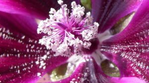 Blumen auf Balkon - Makroaufnahmen