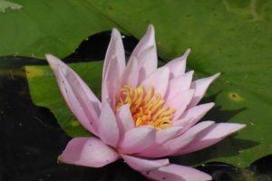 Teich am Heilpflanzengarten