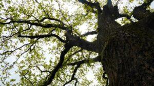 ein Baum mit Chi ^^
