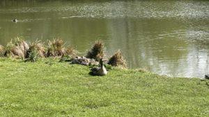im Stadtpark Lehrte