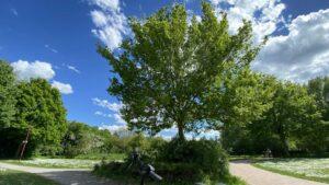 mit E-Bike Kolshorn - Aligse - Lehrte - am Lehrter Bach