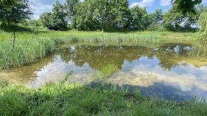 kleiner Teich kurz vor Bilm