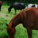 unterwegs Halt an Pferdekoppel