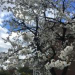Frühling Lehrte